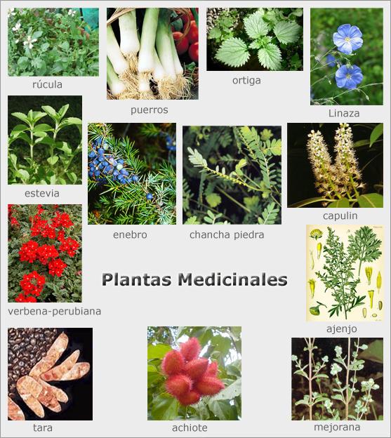 Semanario g2130 los beneficios de las hierbas for Hierbas y plantas medicinales