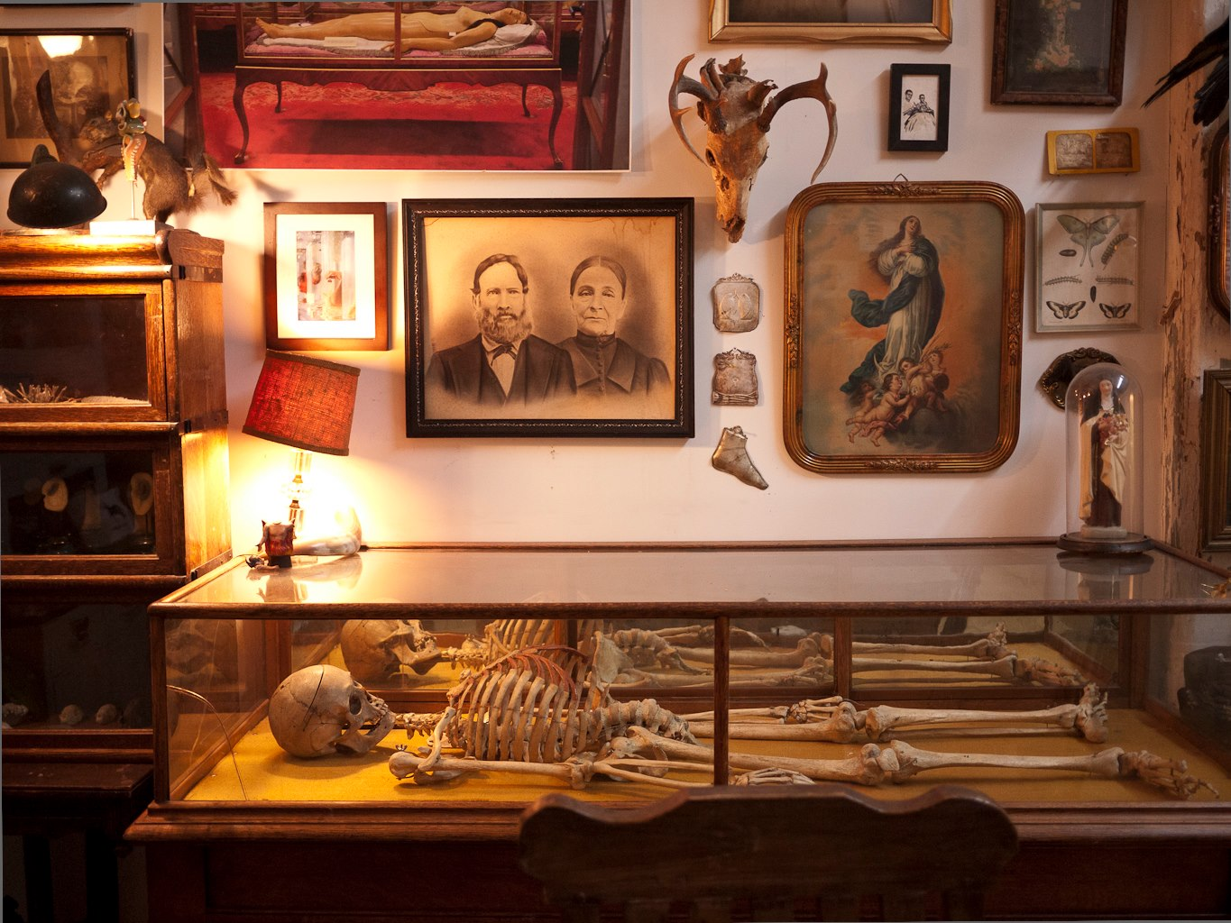 The morbid anatomy museum