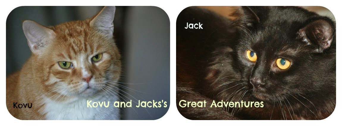 Jack and Kovu's Great Adventures