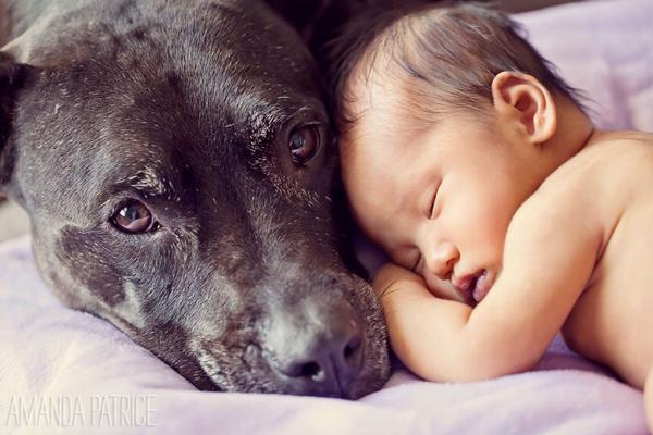 Chú chó canh cho bé ngủ