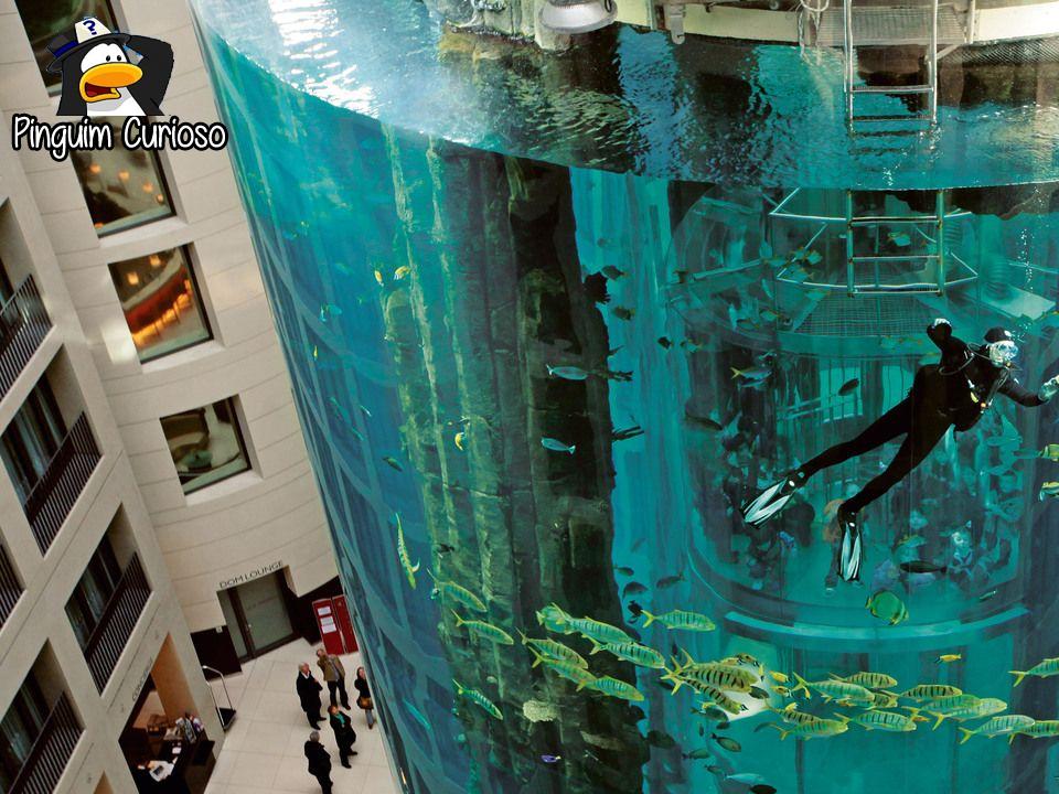 veja incríveis aquários