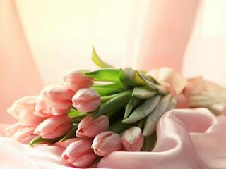 Tulipanes rosa entre saten