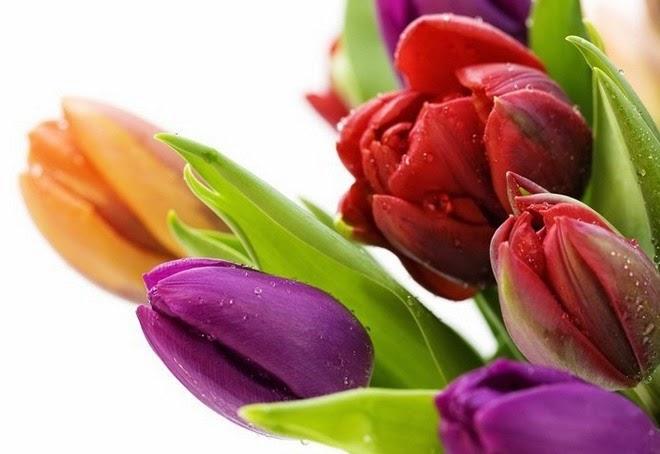 10 loài hoa phụ nữ yêu thích nhất 3