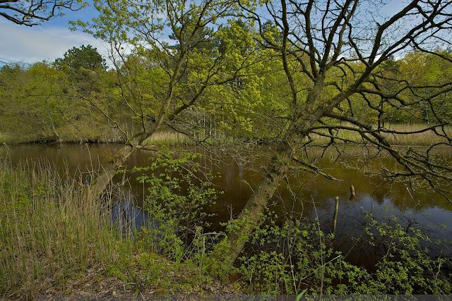 Mooie overhangende bomen boven het water - Nice trees hanging over the water