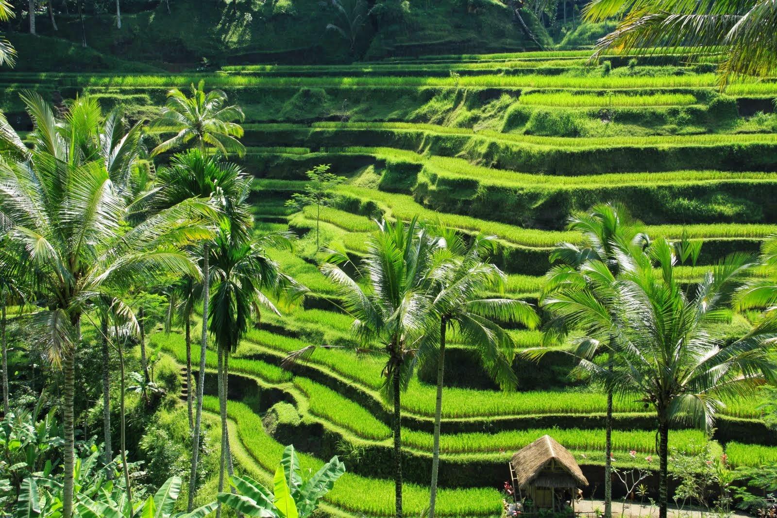 Peluang Bisnis Di Pedesaan yang Sangat Menguntungkan