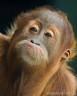 Funny Pics: Animal Funny Faces Pics