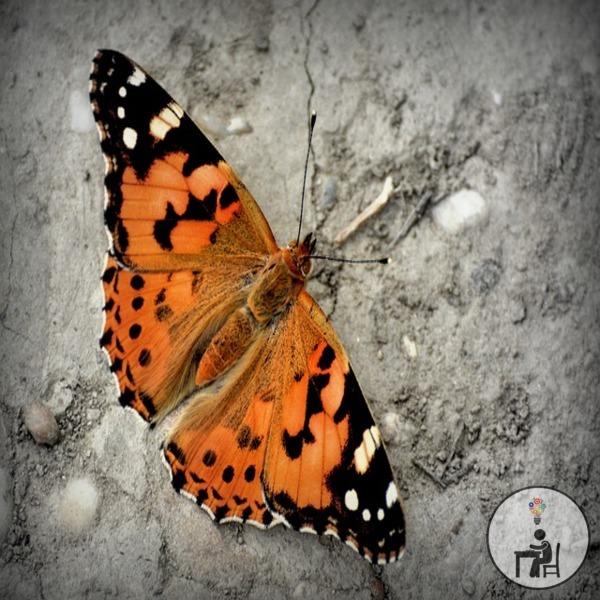 reflexão, para refletir, opinião, atelier wesley felicio,borboleta, a lição da borboleta, artesanato, crafts, handmade,