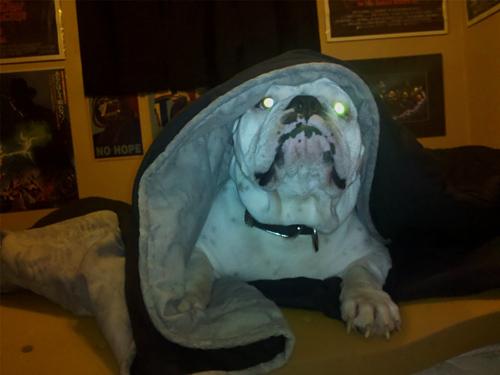 A vingança dos Sith - versão canina
