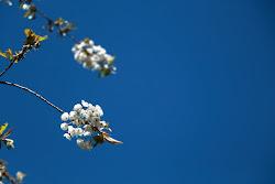 Primavera 2017