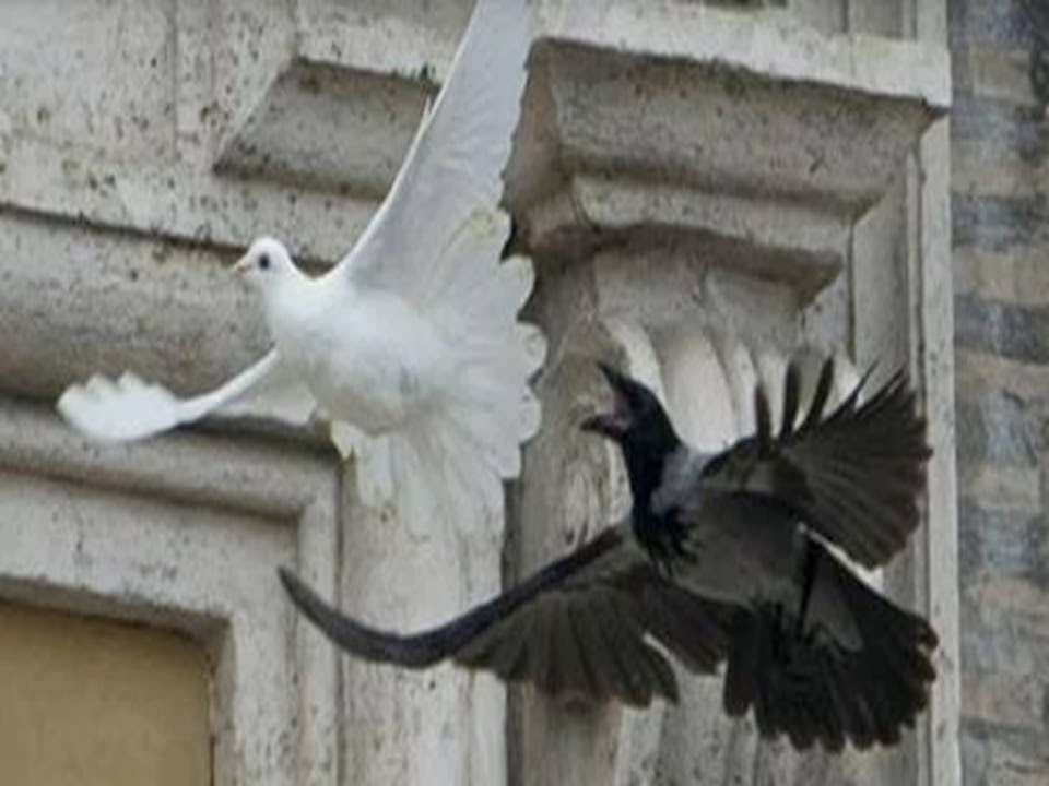 Prophetic Sign Pope Francis Releases Peace Dove And Black Crow