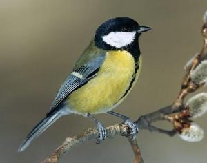 Jenis Burung Yang Sedang Saat Ini 2013