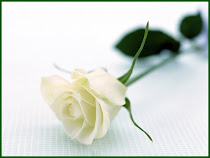 i Like white Rose