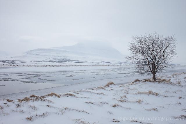 Guðný Pálína Sæmundsdóttir, landscape, iceland