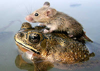 Mouse and Frog