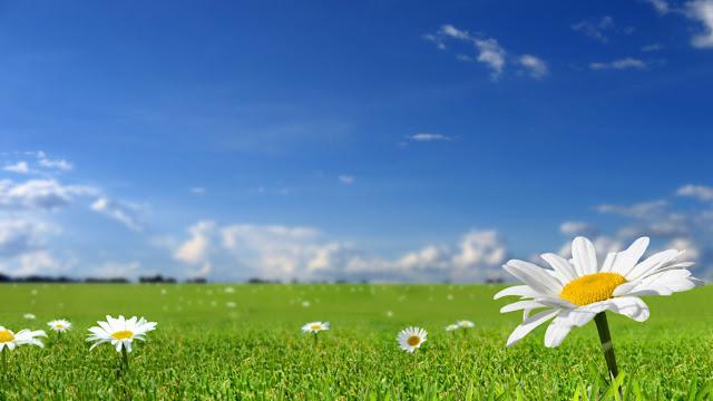 Cánh đồng hoa cỏ xanh tươi mát