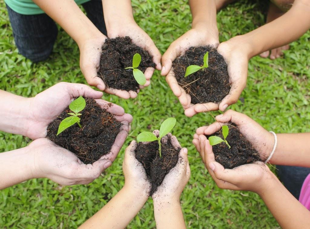berkebun bercocok tanam gaya hidup hijau