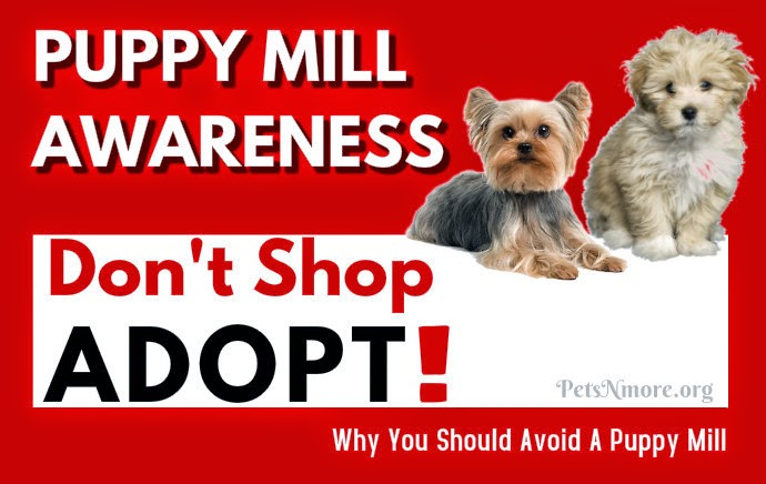 how to train a puppy mill