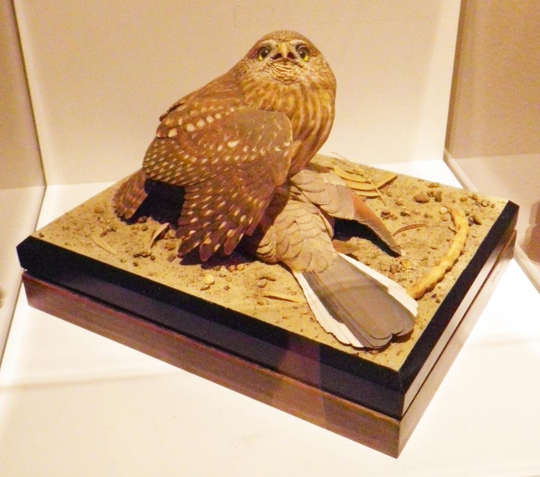 Pal wooden birds