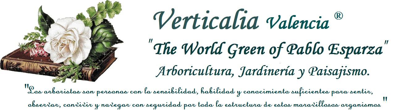 Verticalia Jardinería.Cuidamos tus árboles en Valencia.