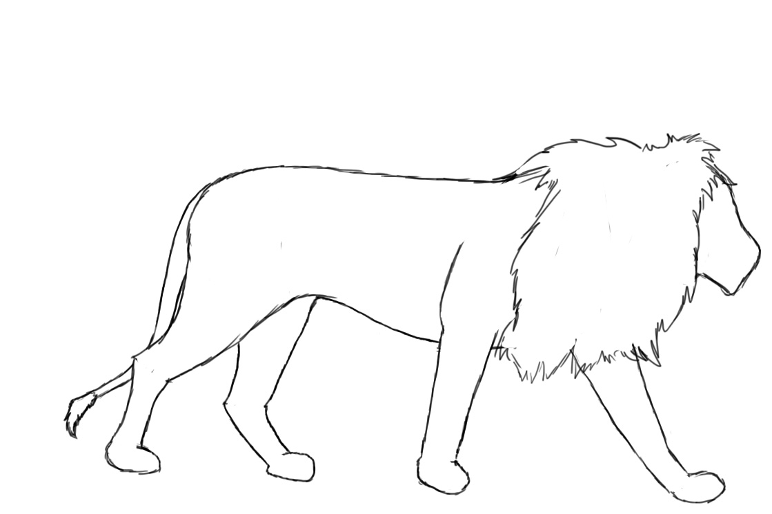 Lion Outline Drawing  Photo#4