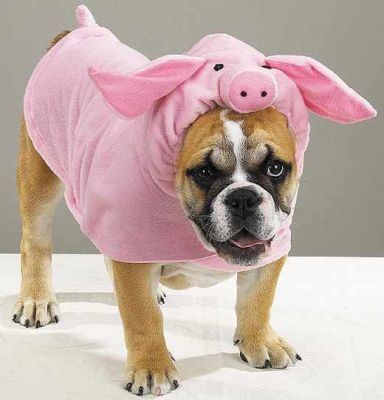 Одежда для собак это не только