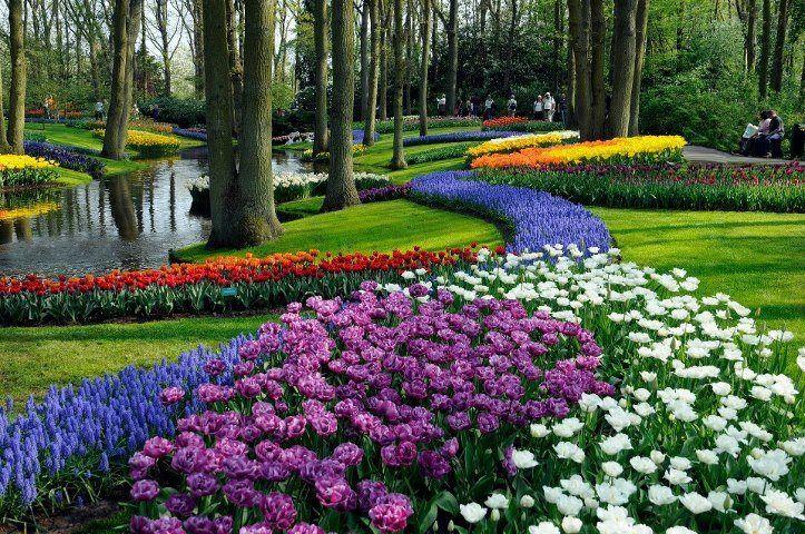 parku me lule ngjyra ngjyra