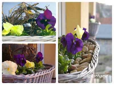 Wiosna- róża róży, torba torbie.