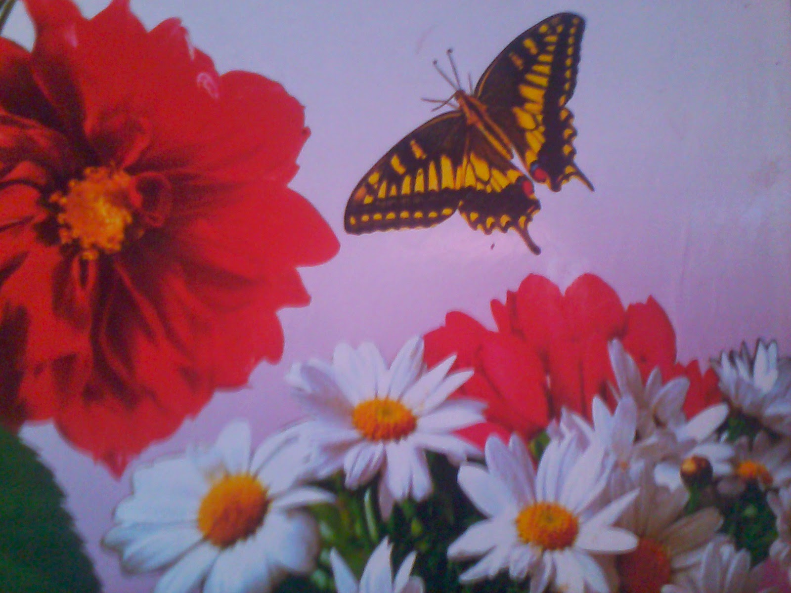 Hindi article about flowers: Phoolo se seekhen jeevan jeene ki kala.