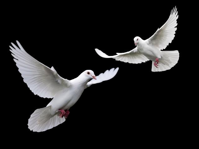 Flying Couple White Bird Wallpaper