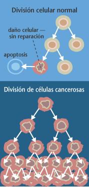 Proceso de division dunha celula cancerixena