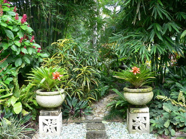 Plants for tropical gardens for Tropical garden designs