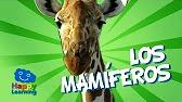 Videos  ANIMALES