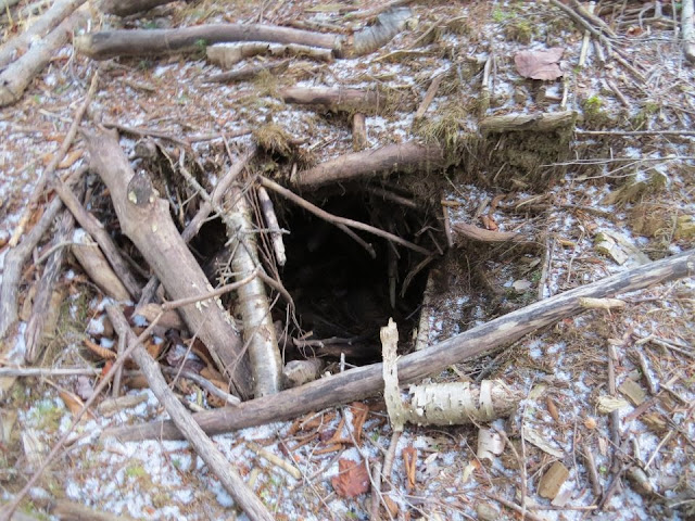 Inside a beaver lodge - photo#17