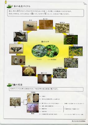 野蚕の成長サイクル
