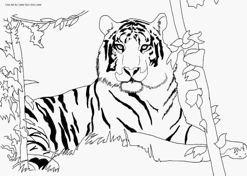 How to draw cartoon tiger cub for Coloring pages tiger cubs