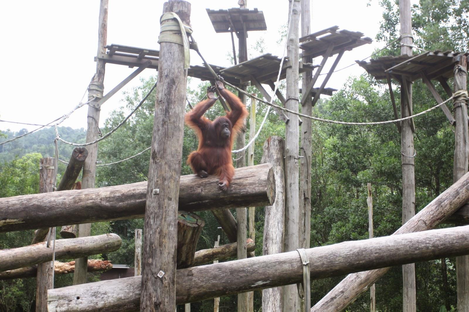 gambar monyet kelakar - foto hewan