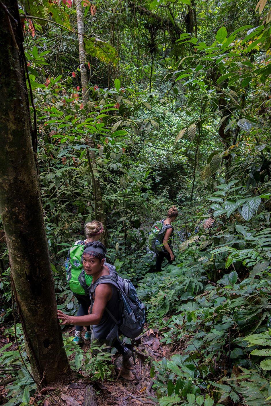 Mandt around the world: bukit lawang [teil 1] – dschungel trekking ...