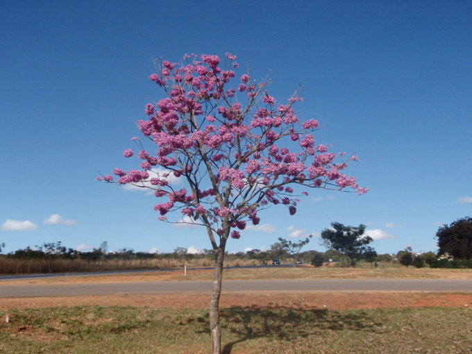 Setor Noroeste - Brasilia (DF)