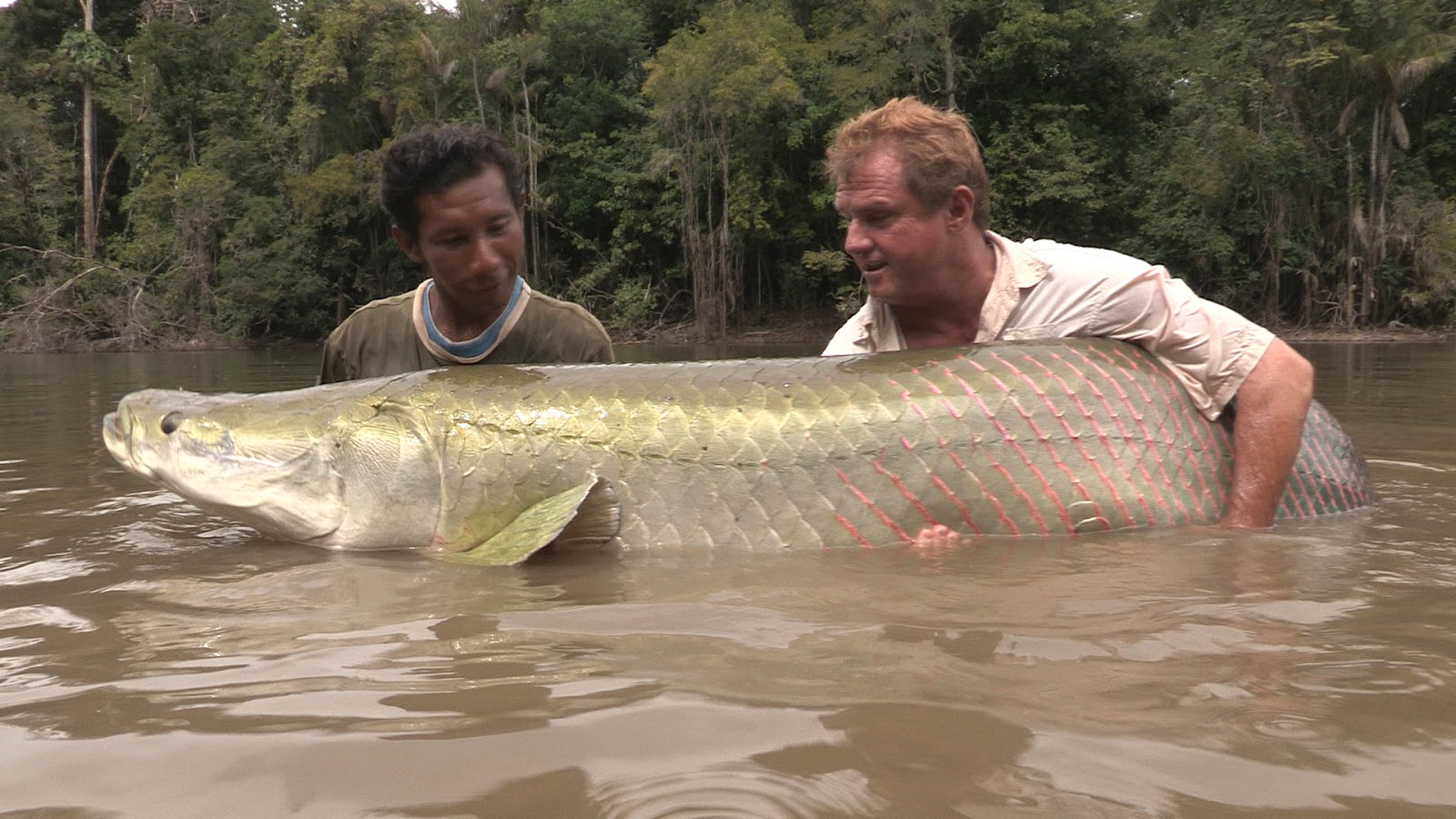International fishing news guyana huge arapaima found in for Fish in the amazon