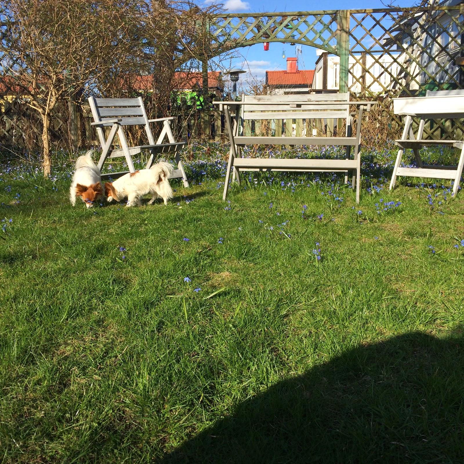 Lattematte (villaliv i enskede): staket projektet: eventuellt en ...