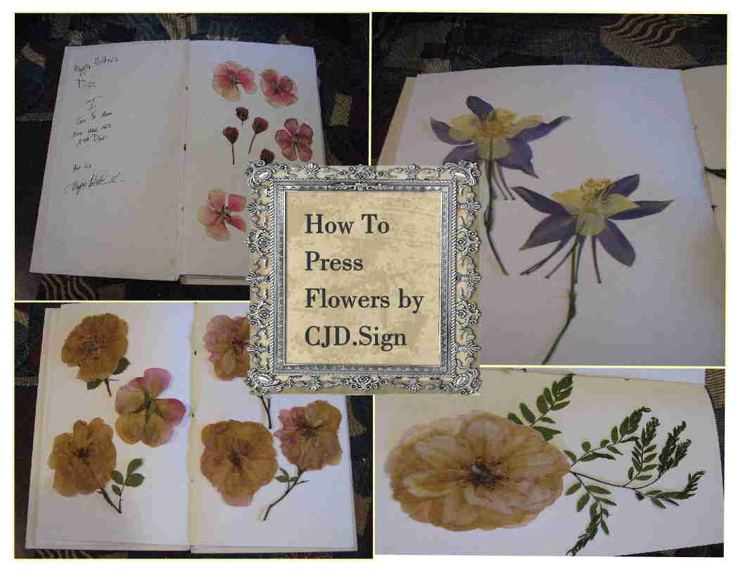 Press Drying Flowers