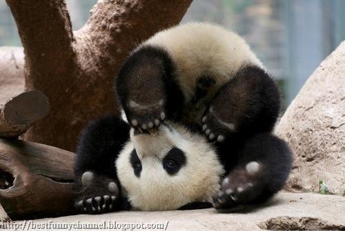 Super panda.