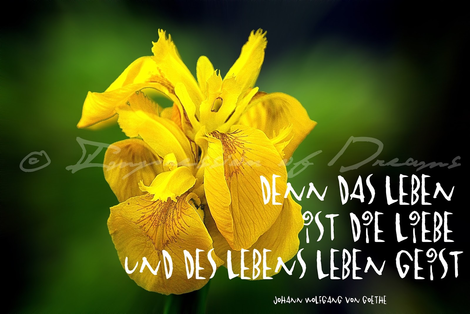 Denn das Leben ist die Liebe und des Lebens Leben Geist