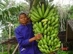 ของกล้วยๆ ใครๆ ก็ปลูกได้