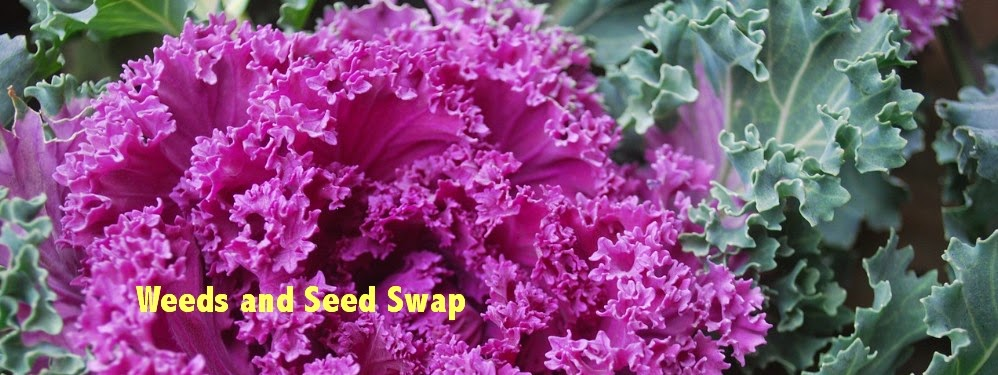 Weeds and Seed Swap