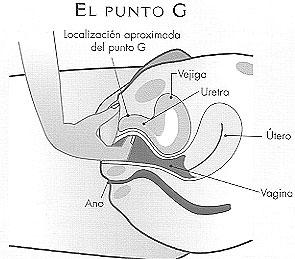 Anatomia Utero, Cervix, Vagina y Trompas Parte I