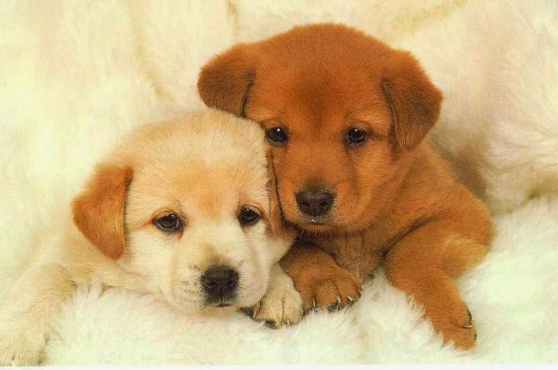 puppy, national puppy day, dogs, american veterinarian medical association, puppy vaccinations