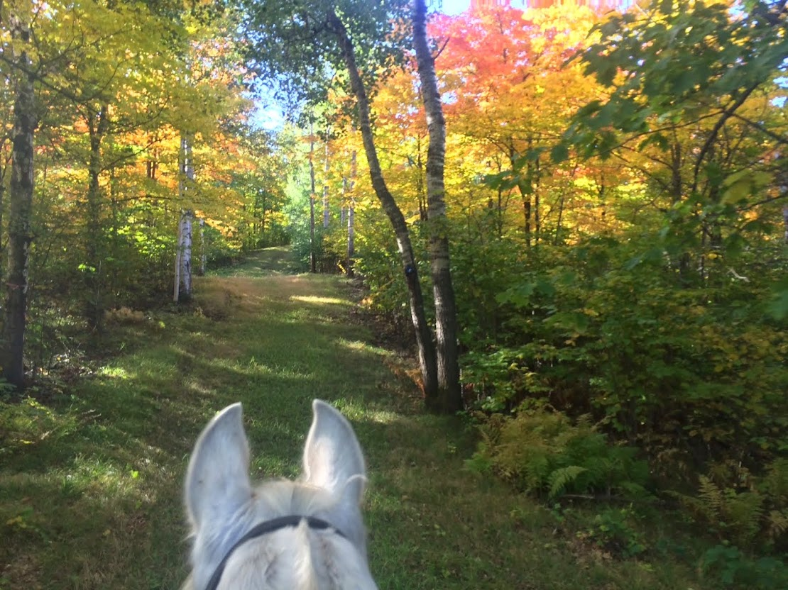 Fall Colors Between Rhio's Ears