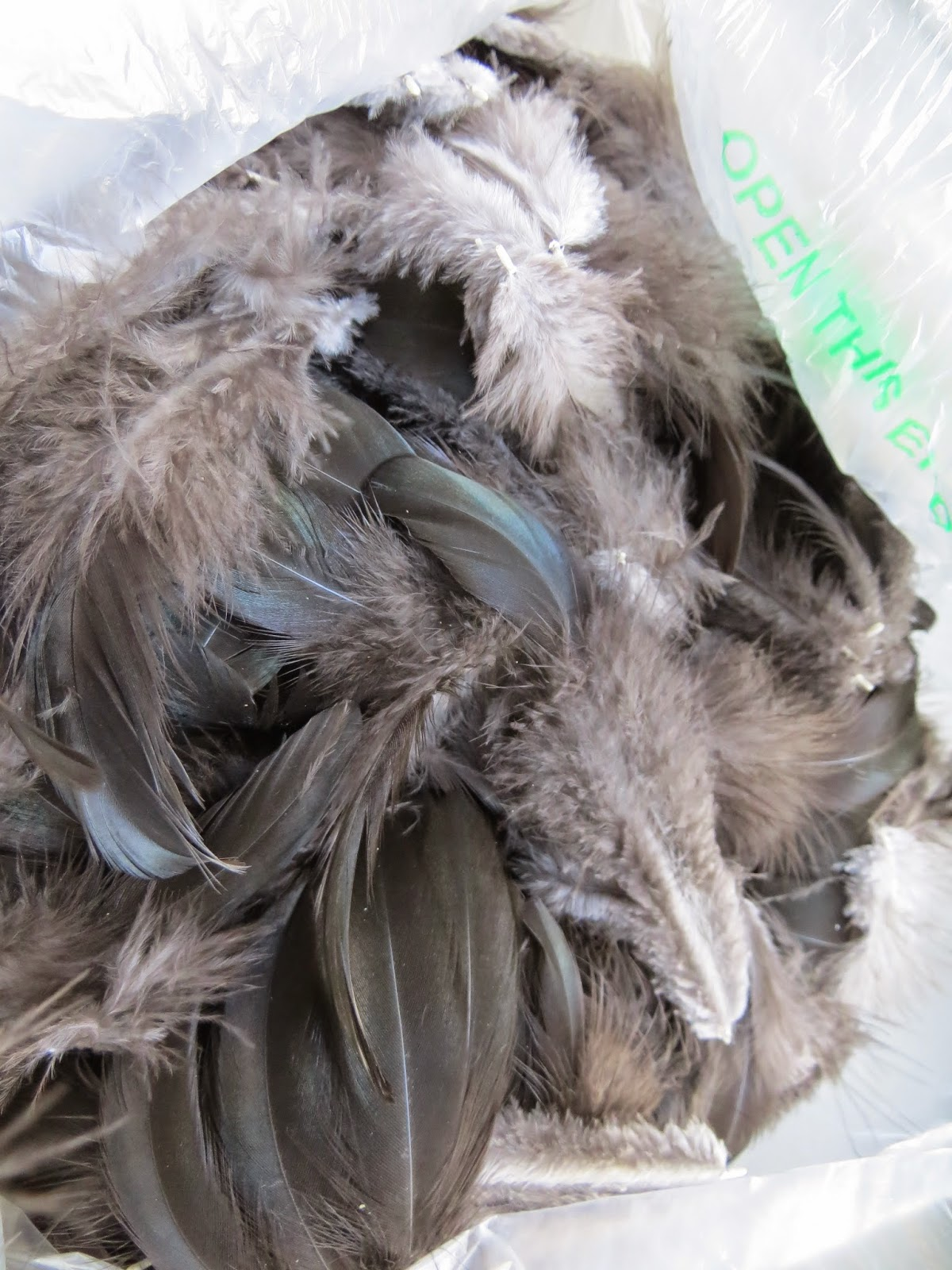 Plucked feathers of black orpington hen for weaving a cloak