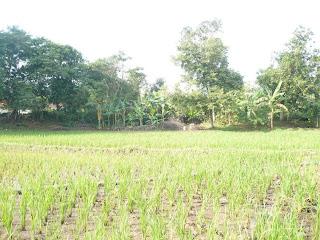 Potret Kampung di Cirebon